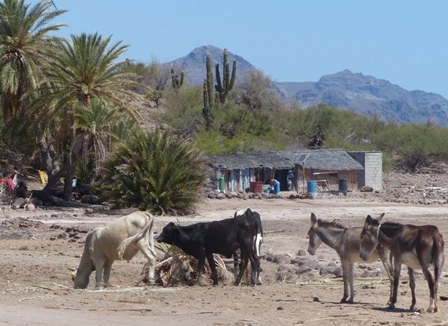 Isolated homestead, San Evaristo